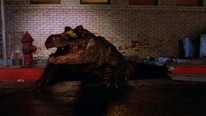 Az aligátor háttérkép