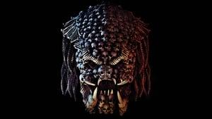 Predator - A ragadozó háttérkép